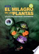 El milagro de las plantas
