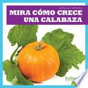 Mira Como Crece Una Calabaza (Watch a Pumpkin Grow)